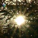 Sonne hinter Büschen