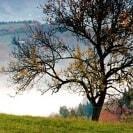 ein Baum vor einem Nebelmeer