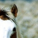 ein Pferd als Beispiel für ein gesundes Selbstwertgefühl