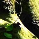 Stamm einer Buche im Waldboden
