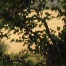 Büsche vor hellem Hintergrund