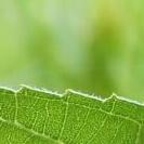 ein Quadrat in natürlichen Grüntönen
