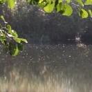 See und Blätter