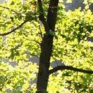 Sonnenlicht im Baum