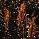 Gräser im Morgenlicht