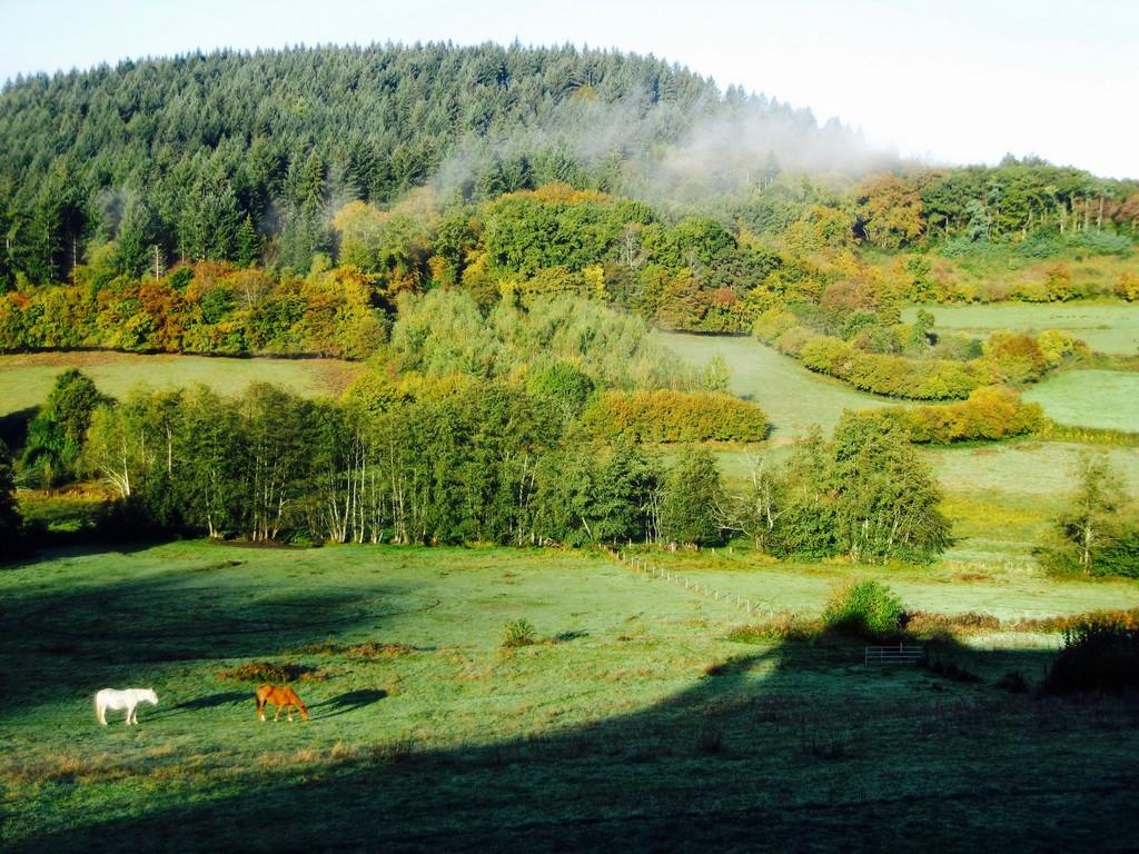 Paysage vu du site