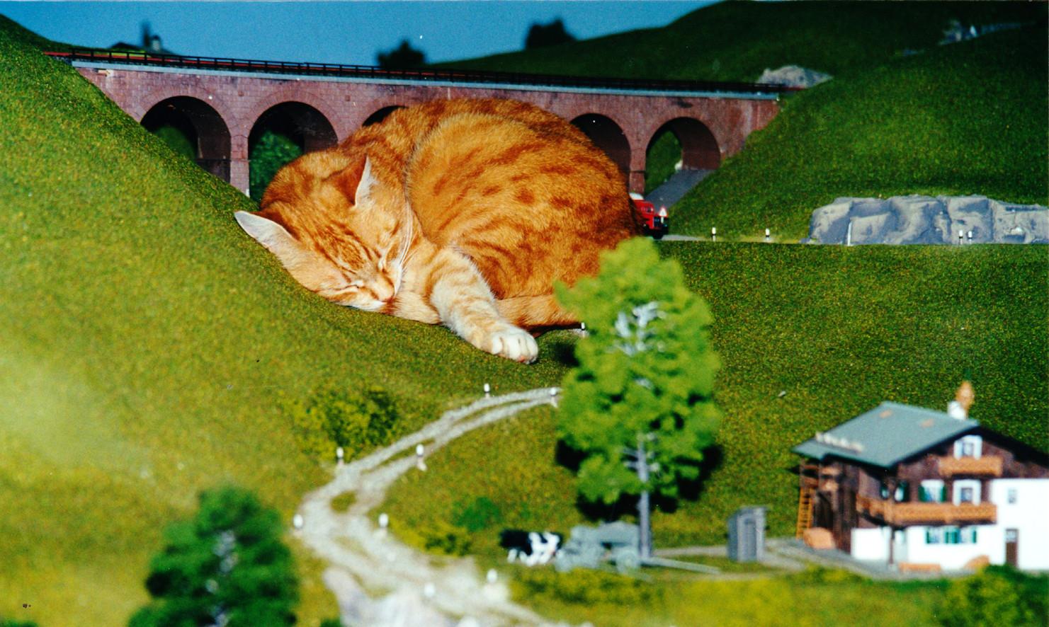 """Unsere Katze """"Samy"""" besuchte zu Lebzeiten oft meine MoBa und schlief am liebsten auf meinem Drehstuhl (mit Kissen) oder auf dieser Bergwiese. Bei ihren Erkundungen quetschte sie sich manchmal auch durch 2-gleisige Tunnelportale mit Oberleitung"""