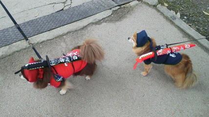伊賀上野には忍者犬もいます!