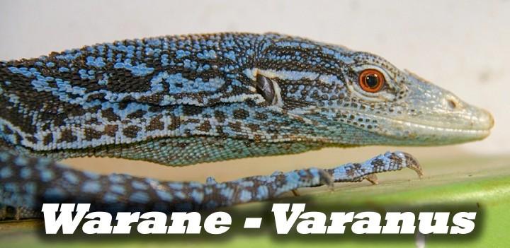 Warane - Varanus