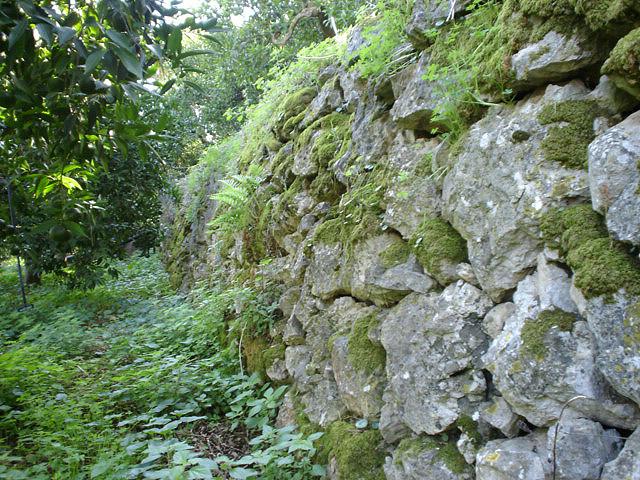 """Tipici terrazzamenti a """"secco"""" realizzati dai nostri contadini agli inizi del secolo"""