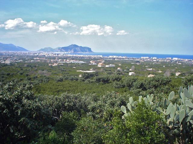 Agrumeti e nespoleti si fondono restituendo la nostra tipica macchia mediterranea