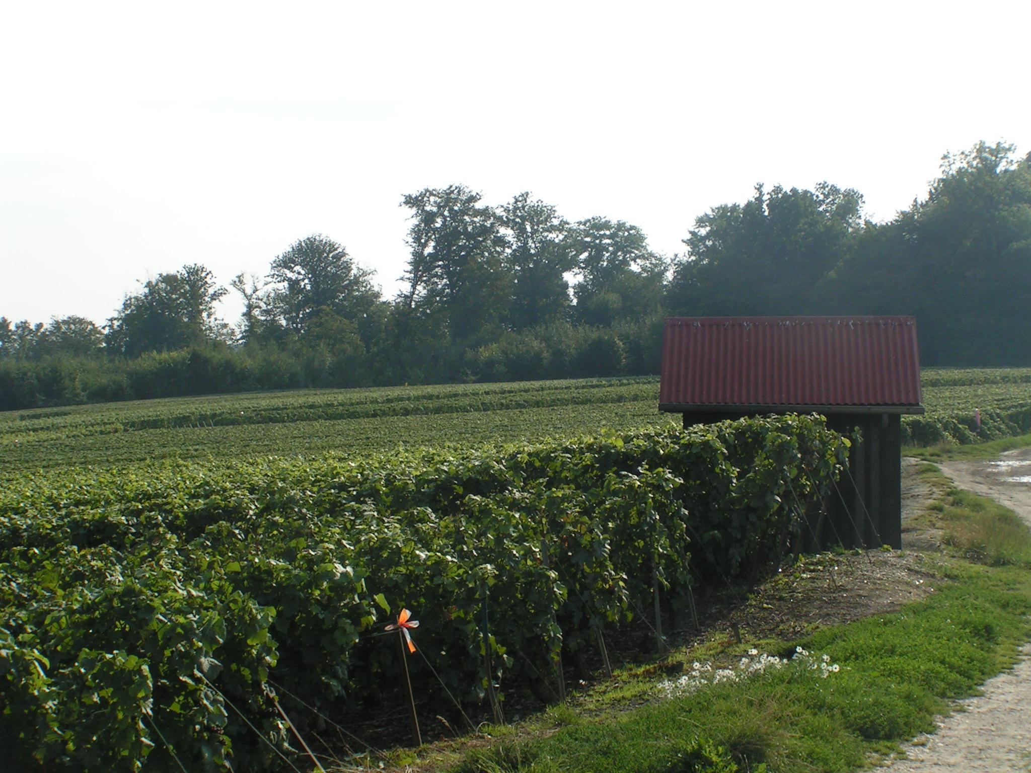 Les vignes de Moulin