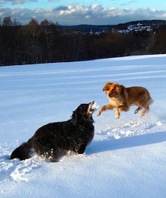 """Booker völlig losgelöst: """" sie spielt mit mir, sie spielt mit MIR!"""""""