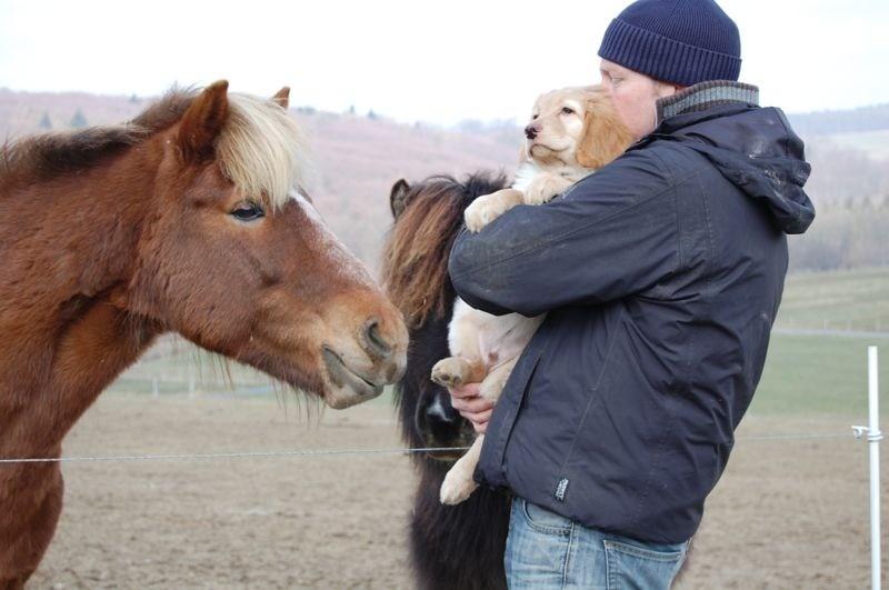 und einem hellen Pferd...