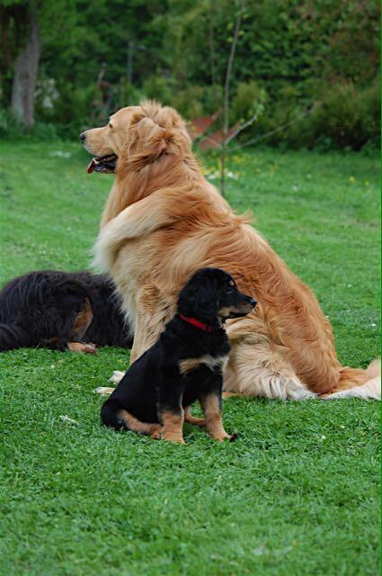 Papa Booker Bleik mit Töchterchen Shany