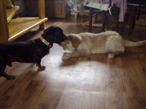 Birdy/ Benjamin kennt die internationale Hundesprache und macht alles richtig in seinem neuen zu Hause.