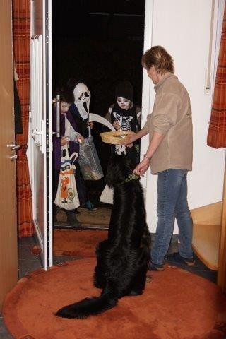 In der Nacht zum 01.11: Bjarny beäugt skeptisch die ersten Geister...