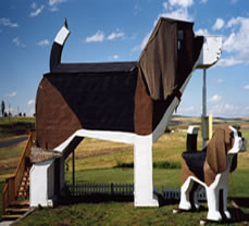 Hotel Dog Park Inn (Source : dogbarkparkinn.com)