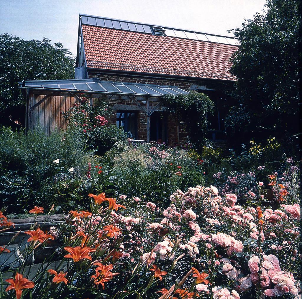 blühender Sommergarten