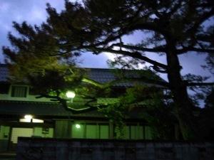 伐採前夜の松の木のシルエット。宿と一緒に。