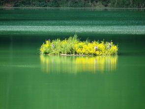 Pflanzeninsel im Stausee Glems - A. Gorthner / NABU Metzingen