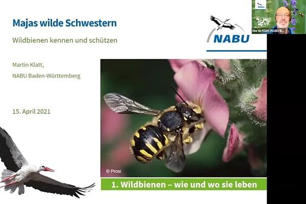 Video-Mitschnitt: Wildbienen-Vortrag