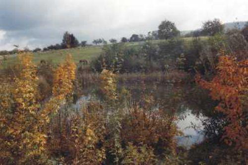 Foto: Schmiedstobelsee, heute - NABU Metzingen