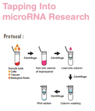 RNA isolation kit, Aufreiniung von RNA