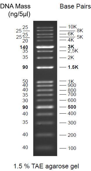 DNA Leitern von GeneON