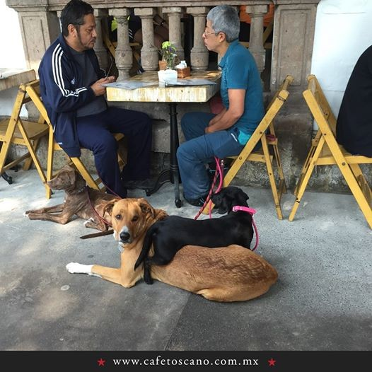 Lugares Pet Friendly en Condesa, Toscano, Condesa