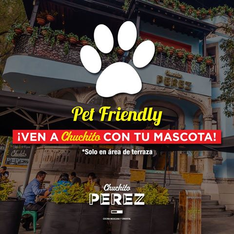 Lugares Pet Friendly en Condesa, Chuchito Perez, Condesa
