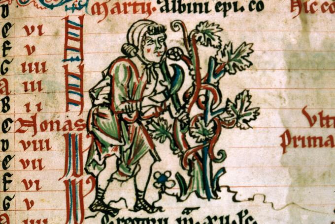 Taille de la vigne - psautier cistercien dit de Bonmont, vers 1260. Le rôle prépondérant des moines cisterciens dans l'introduction de la famille des Pinots dans toute l'Europe est souvent évoqué.