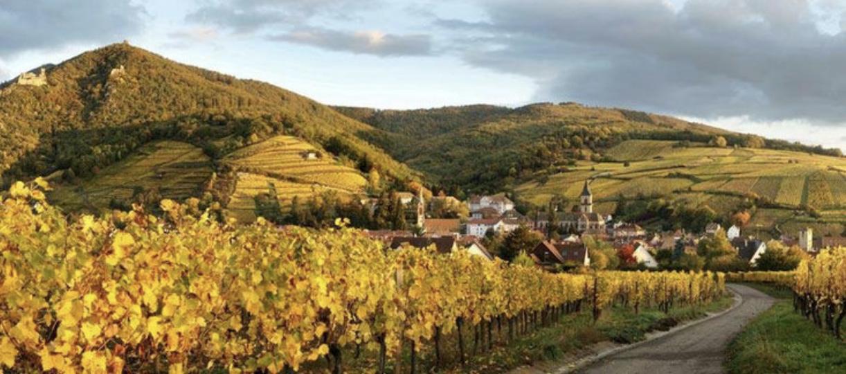 Les Grands Terroirs Alsaciens | Osterberg, Geisberg et Kirchberg à Ribeauvillé