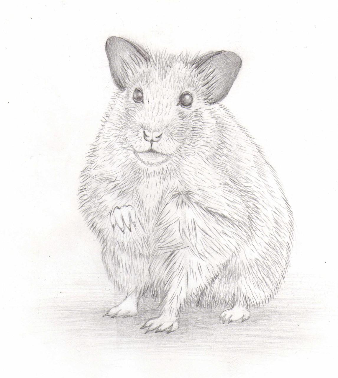 Dessins sur Feuille > Hamster