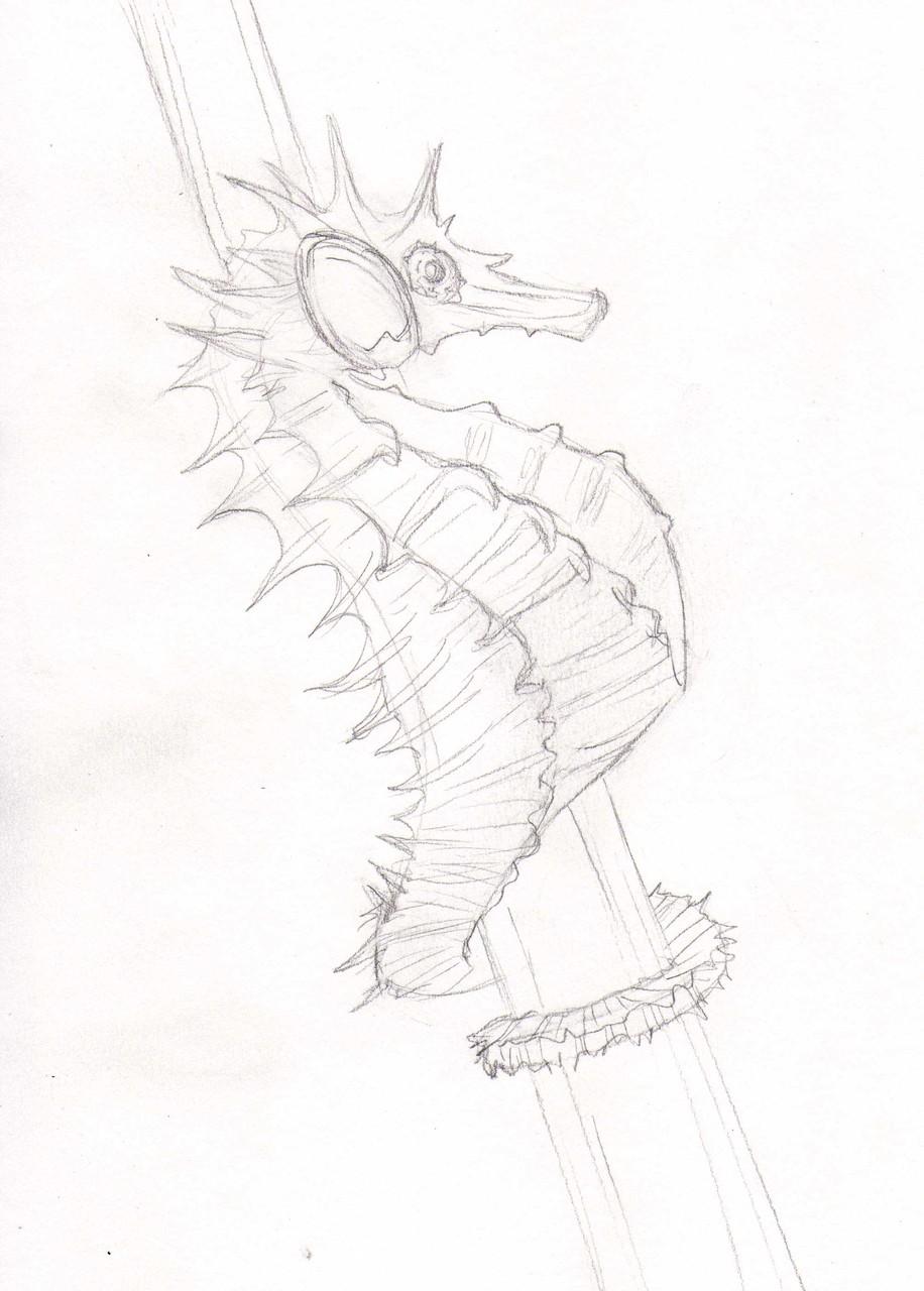 Dessins sur Feuille > Hippocampe