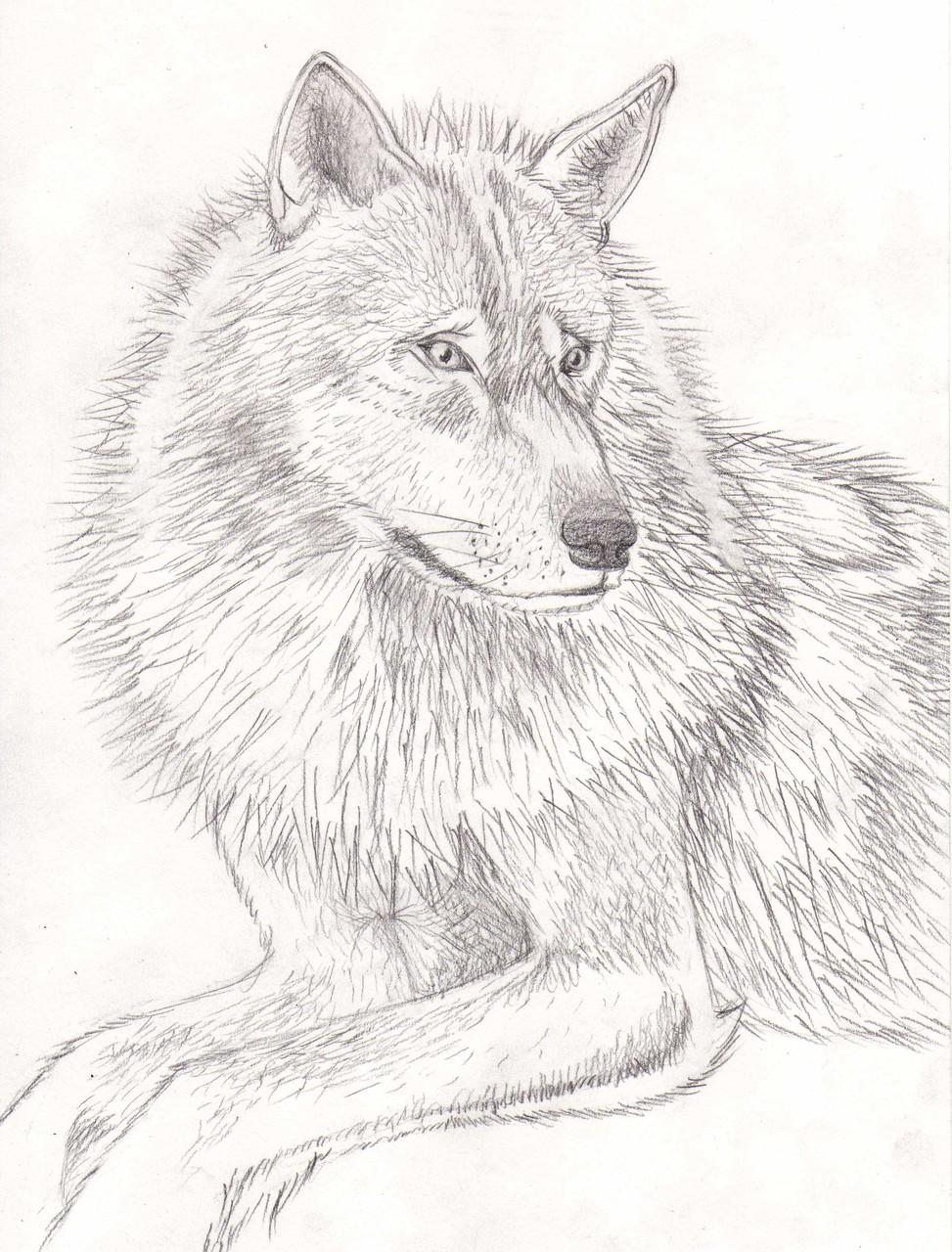 Dessins sur Feuille > Loup