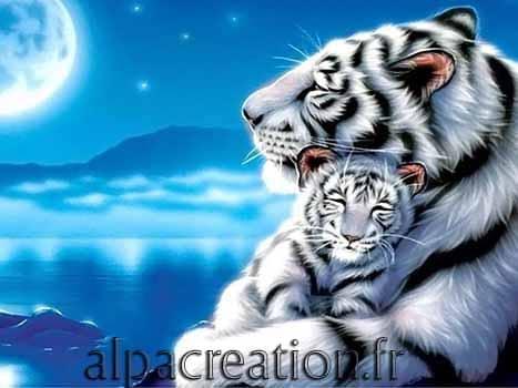 Tigre et son bébé
