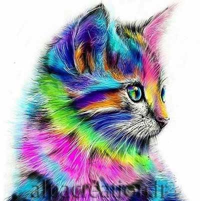 Chaton multicolore