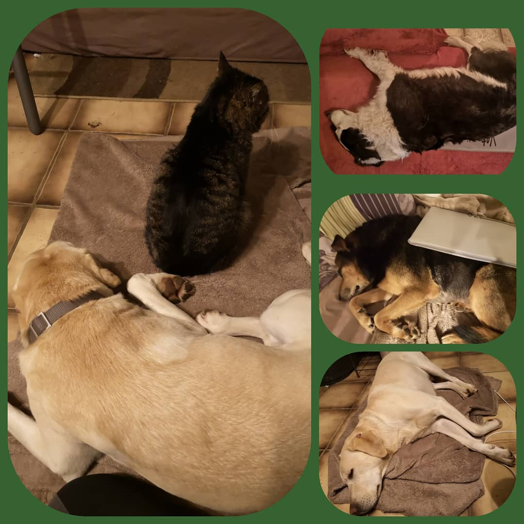 Frequenz-Feld-Therapie am Tier