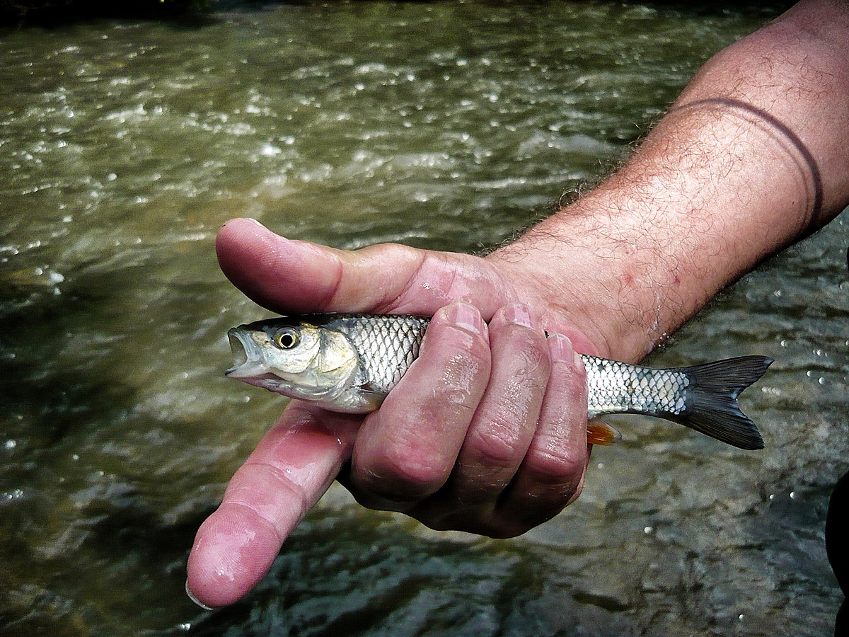 Schonender Umgang mit Fischen