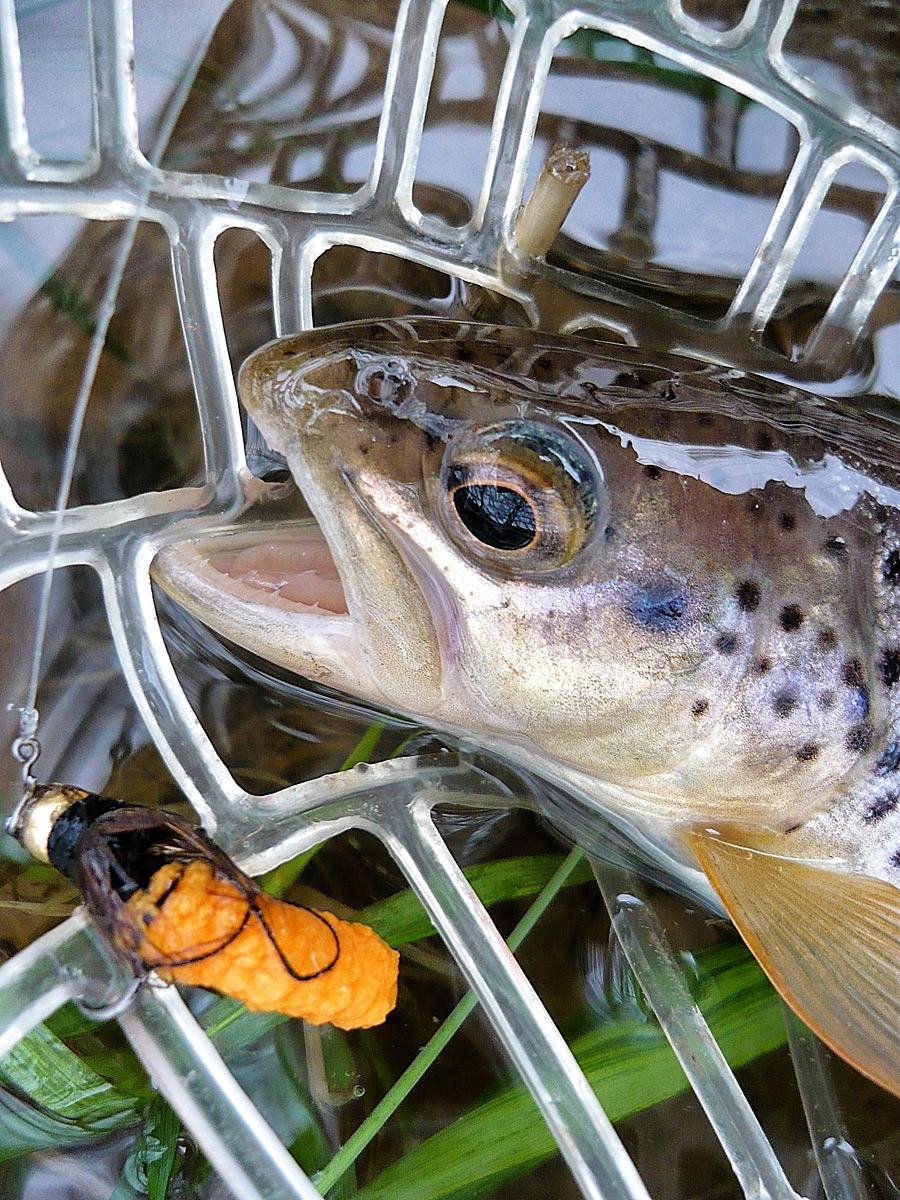 Einfach Fliegenfischen lernen ...