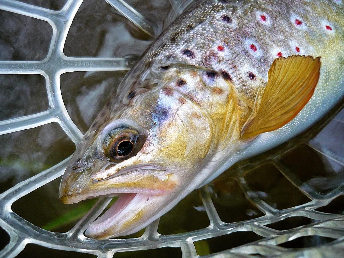 Fliegenfischerschule-Hessen / Fliegenfischerkurs / Kurse für Anfänger und Fortgeschrittene / Guiding Einfach Fliegenfischen lernen ...