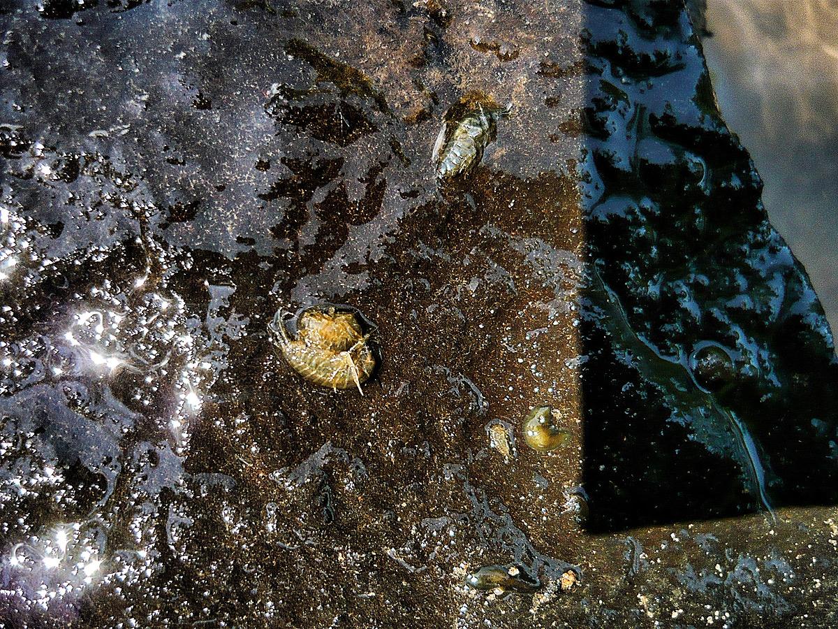 Insektenkunde am Wasser