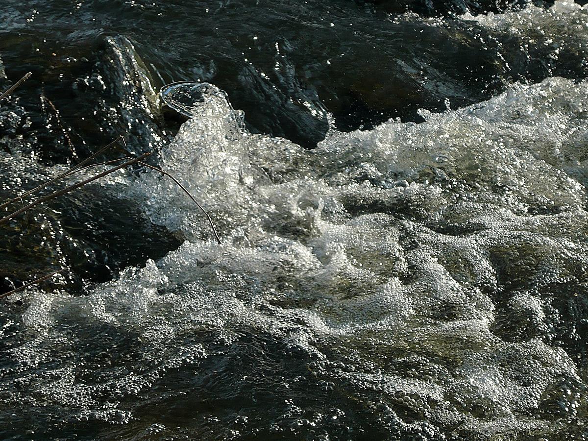 Als Fliegenfischer die Natur erleben ...