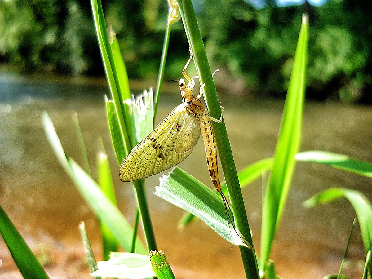 Insektenkunde am Platz