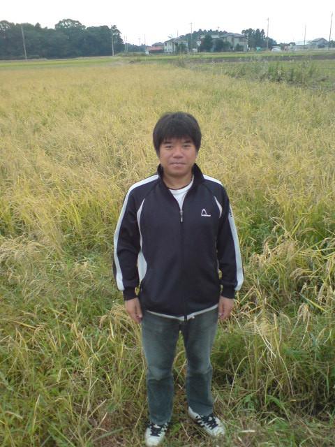 稲刈り前の田んぼです。