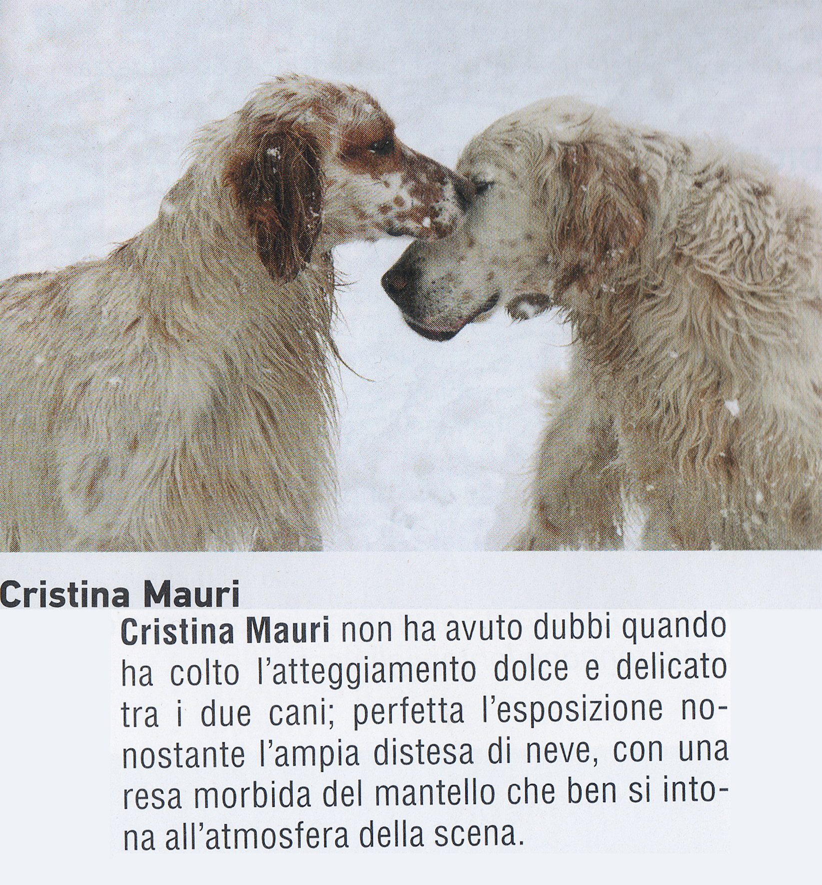 """pubblicata su Tutti Fotografi, Dicembre 2016 _concorso: """"Cani e Gatti:o amici per la pelle?""""_"""