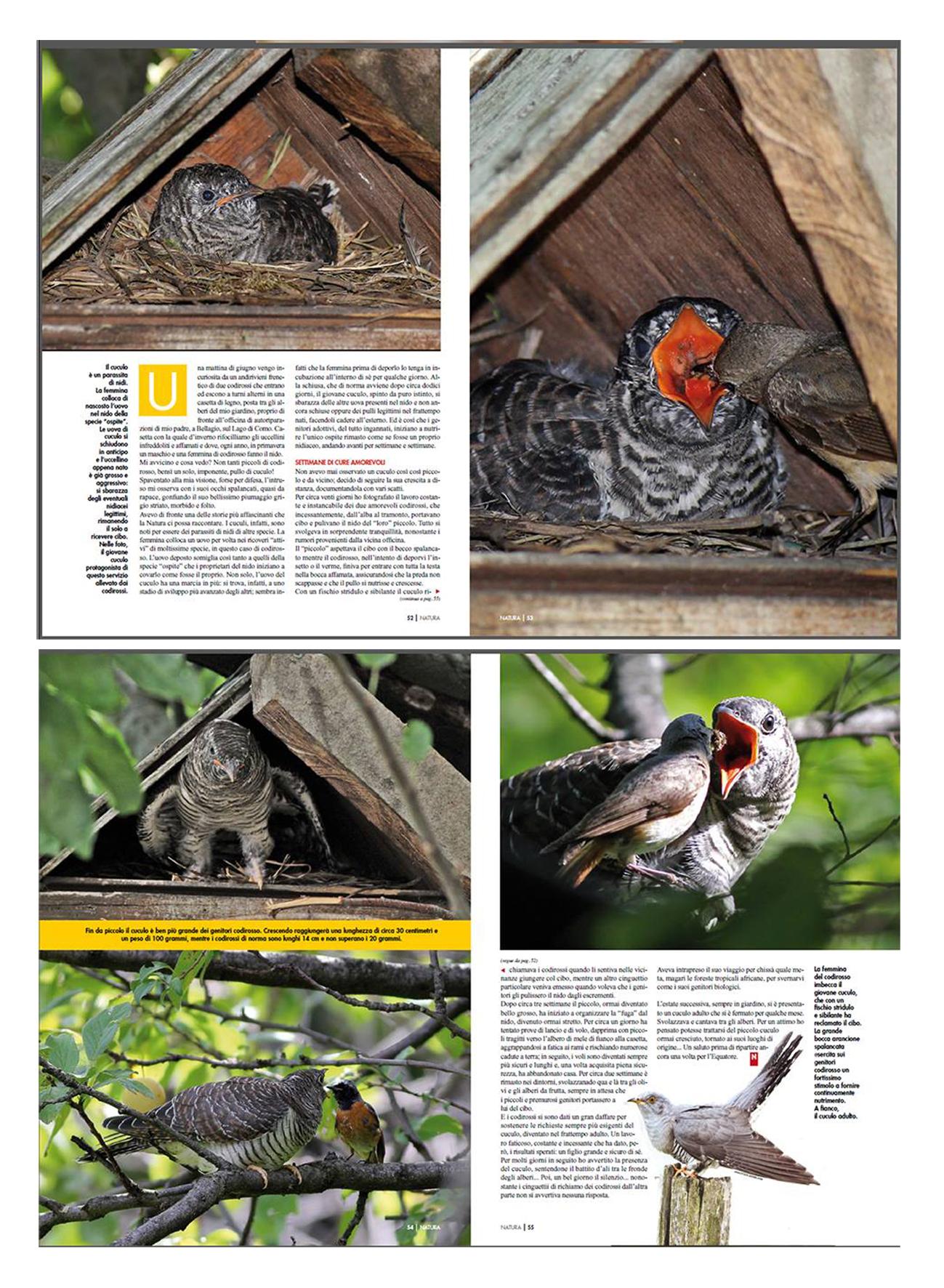 """testo e fotografie pubblicate sulla Rivista della Natura """"L'inganno: la storia del cuculo"""""""