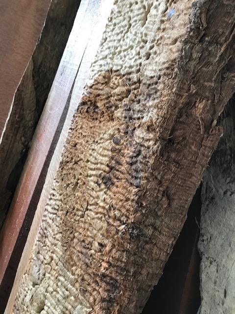木肌はワニ風