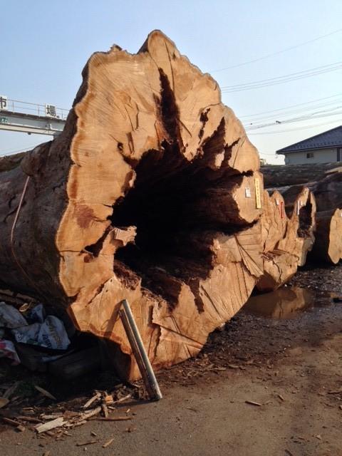 直径約3m以上のケヤキング。鉄棒が約1mくらい